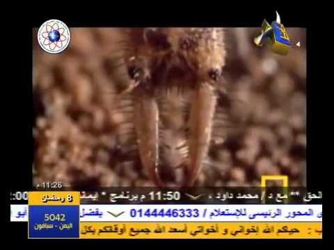 شواهد الحق في خلق النمل والبعوض (2/2)