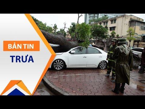 Hà Nội: Gió to, cây đổ đè bẹp ô tô | VTC - Thời lượng: 33 giây.