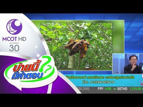 สมุนไพรไทยราคาดี คนสนใจเยอะ จะต้องปลูกอย่างไร (23 พ.ค.60) บ่ายนี้มีคำตอบ | 9 MCOT HD