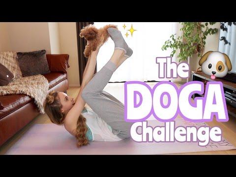 Doga Yoga pour chiens