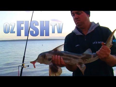 Oz Fish TV Season 2 Episode 3, Lang Lang, Land based Fishing