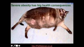 Obesity In Pets Part 2