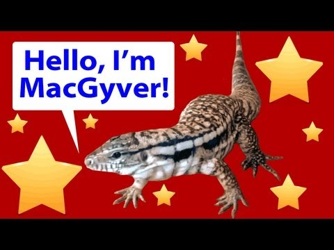 lizard - MacGyver is a lizard who thinks hes a puppy. He's very young in these clips, so make sure to check out more recent videos to see him as 4 ft long and 11 lbs.