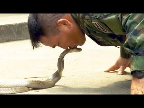 Schlangenblut trinken, Skorpione essen: Dschungeltrai ...