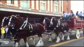 The Budweiser Clydesdales are in Texarkana, and a spectacular number of spectators and fans came out to see the famous team parade through downtown Texarkana.
