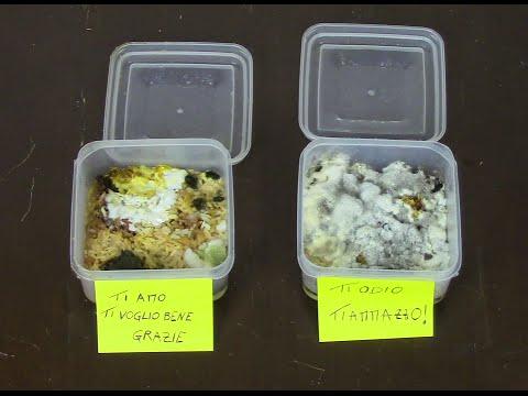 l'esperimento del riso di masaru emoto: inquietante!