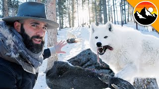 HUNGRY LIKE A WOLF - Feeding a Deer to Wolves! by Brave Wilderness