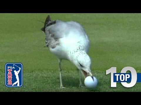 Top 10 Animal Encounters on the Golf Course