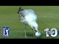 Top 10 - Animal Encounters on the PGA TOUR