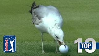 Video Top 10: Animal Encounters on the PGA TOUR MP3, 3GP, MP4, WEBM, AVI, FLV Oktober 2018