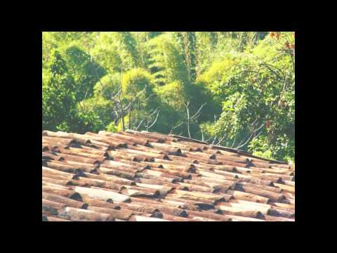 telhados de estrela do sul