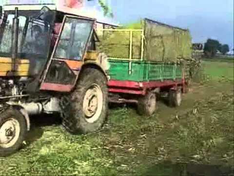 kukurydza 2010