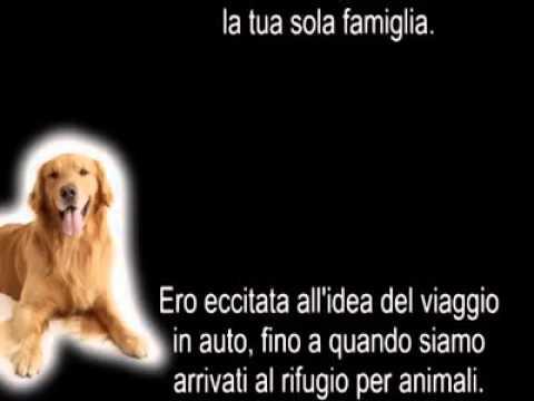 Lettera di un cane al suo amico umano ★ Un addio straziante…