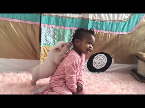 troppo bello: un maialino che gioca con un bambino