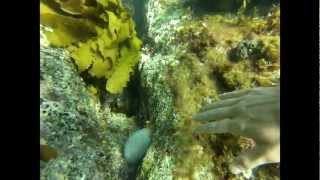 Port Noarlunga Australia  City new picture : Snorkeling in Port Noarlunga, South Australia