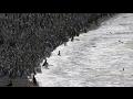 Un millón de pingüinos llegan a la península argentina de Punta Tombo