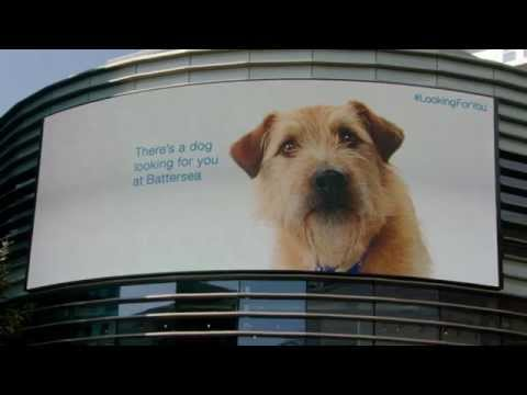街中のディスプレイを使って犬があなたを追い掛け回す!