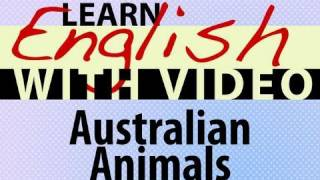 Australian Animals Lesson