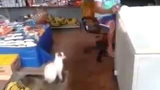 Macskát átverték nagyon