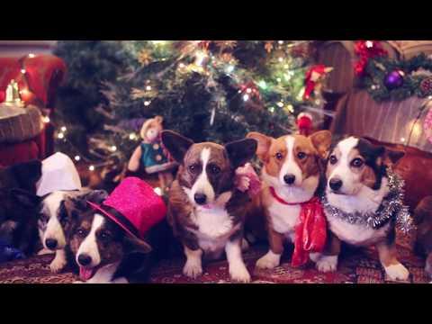 Как собаки отмечают новый год без людей