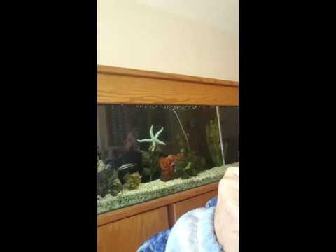 Watching the Starfish!