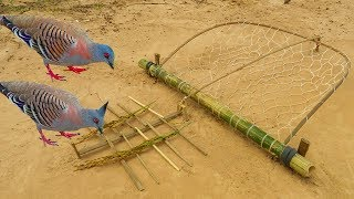 Video Easy Bird Trap - Simple DIY Creative Bird Trap make from Net That Work 100% By Men MP3, 3GP, MP4, WEBM, AVI, FLV Juli 2019