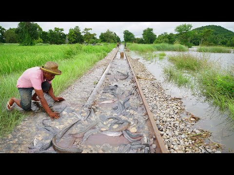 OMG! Unbelievable Catch o lot Fish On The RAILWAY After Flood - Best Catching Copper Fish  & Catfish