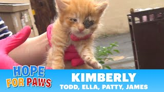 Family of kittens almost thrown into the trash - we got there just in time! by Hope For Paws