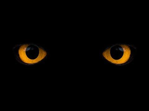 Co vidíme ve tmě?