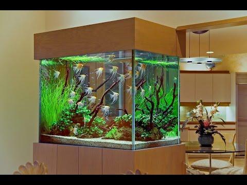 Выбор аквариума! Аквариум для начинающих  аквариумистов! Какой аквариум выбратьх