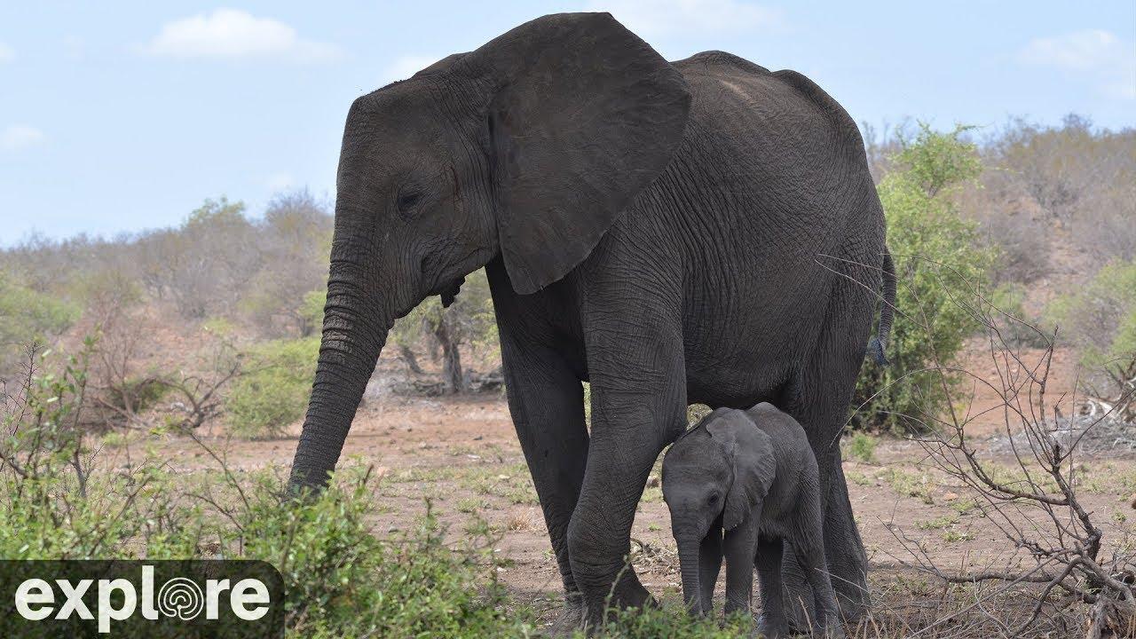 【テンベエレファントパーク】南アフリカに生息する象やライオンなど野生動物の様子