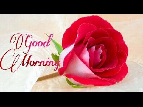Latest Good Morning Wishes, SMS, Greetings, Whatsapp Video Message