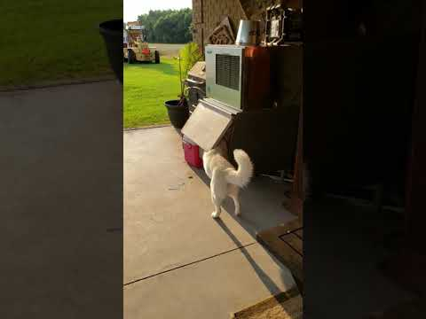 Koira löysi viileen paikan hellepäivänä – Kelpaa köllötellä!