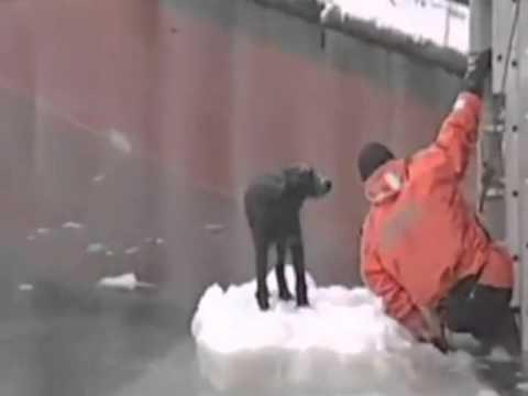 Russia, cane bloccato sul ghiaccio, lo salva il pescatore