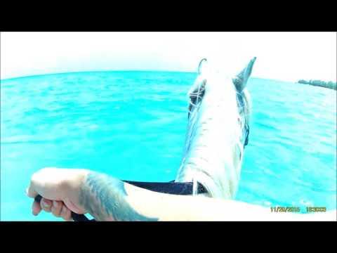 Horseback riding in Grand Cayman
