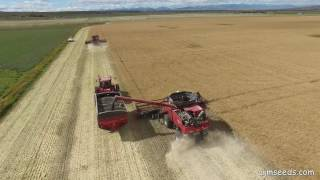 Nonton 2016 Canola Seeding To Harvest In Southern Alberta Film Subtitle Indonesia Streaming Movie Download