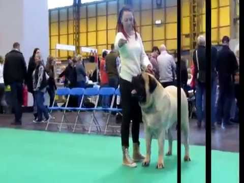 Cruft Dogs Show Birmingham 06.03.2014  Public and Show