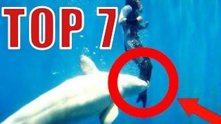 Video Top 7 - zvieratá ktoré zachránili ľudské životy MP3, 3GP, MP4, WEBM, AVI, FLV Mei 2017