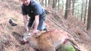 Wanganui New Zealand  city photos : Fallow/Red deer meat hunt Wanganui NZ