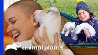 Two Blind Pups Are Looking For Their Forever Homes   Amanda To The Rescue by Animal Planet