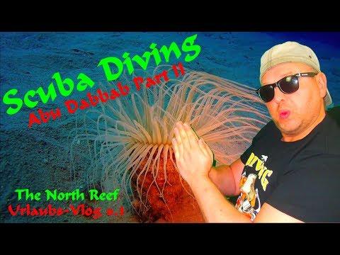 SCUBA DIVING EGYPT - Abu Dabbab Part 2/2 - The North Reef 2018_Búvárkodás. Heti legjobbak
