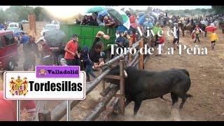 Nonton Especial Del Toro De La Pen  A 2016 Antiguo Toro Vega  Tordesillas  Film Subtitle Indonesia Streaming Movie Download