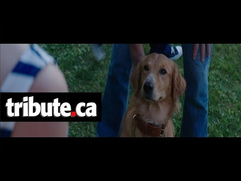 A Dog's Purpose (Clip 'Bailey Notices Smell')