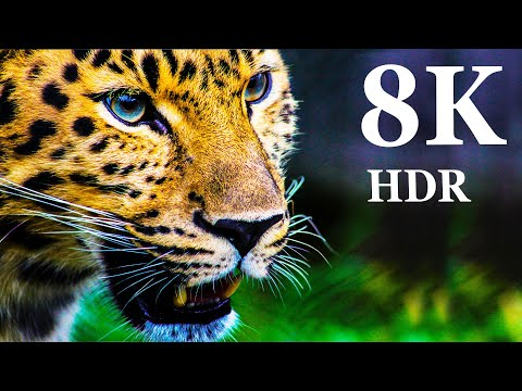 8K VIDEO ULTRA HD - Collection of Animals HDR (60FPS)