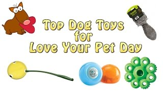 Top 5 Dog Toys For Love Your Pet Day