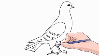 Easy step by step tutorial on how to draw a dove, pause the video at every step to follow the steps carefully. Enjoy ;)- Facebook: https://www.facebook.com/HowtoDrawSimply