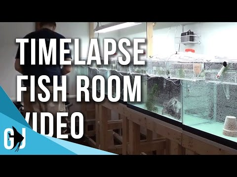 #156: Time Lapse Filling the Fish Room (видео)