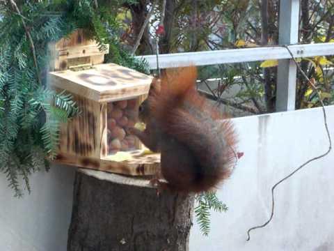 Ottilie von der Ruhr. Eichhörnchen - Futterstation letzter Teil.