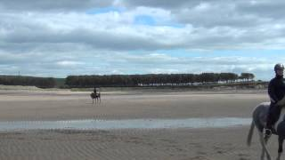 Kilconquhar United Kingdom  city photos gallery : Kilconquhar Equestrian Centre Beach Hack