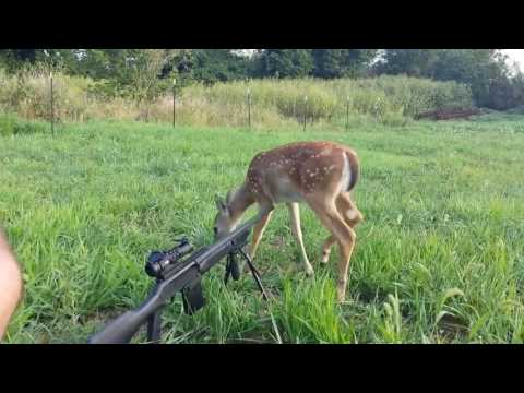 Best Hunting / Gun Fails Compilation